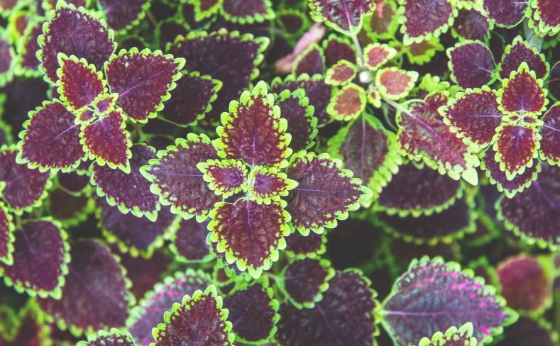herbal detox remedies