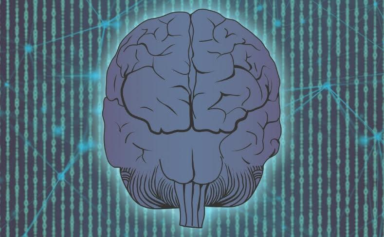 opioid brain